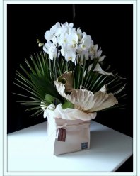 pack of orchids � 180,00